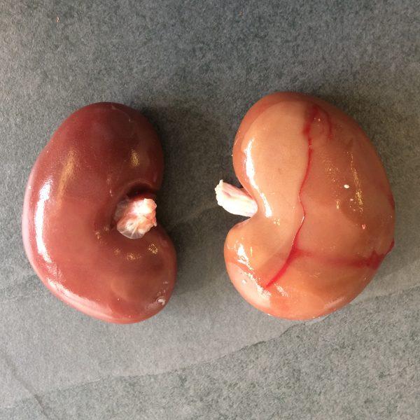 Goat Kidneys
